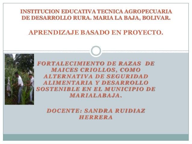 FORTALECIMIENTO DE RAZAS DE MAICES CRIOLLOS, COMO ALTERNATIVA DE SEGURIDAD ALIMENTARIA Y DESARROLLO SOSTENIBLE EN EL MUNIC...