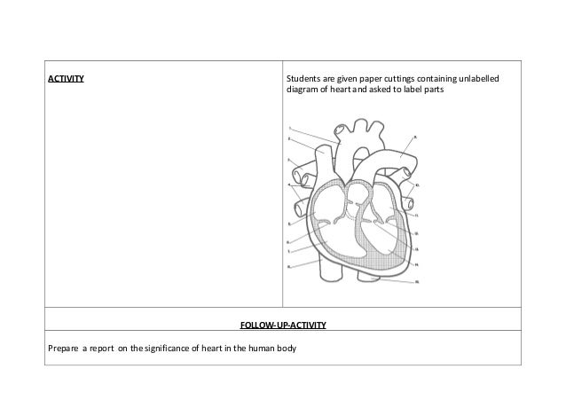 innovative lesson plan structure of heart, Muscles