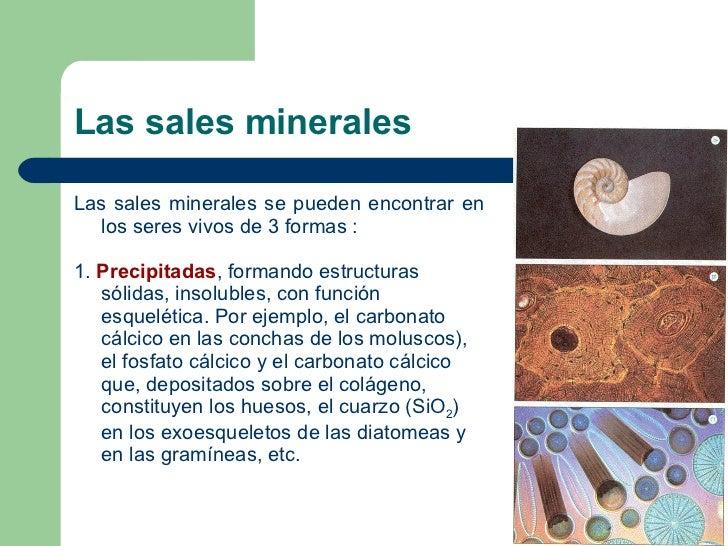 Biomoléculas inorgánicas: Las sales minerales Slide 2
