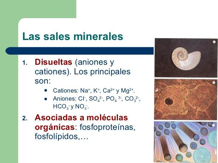 Biomoléculas inorgánicas: Las sales minerales Slide 3