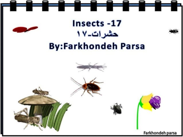 Insect 17