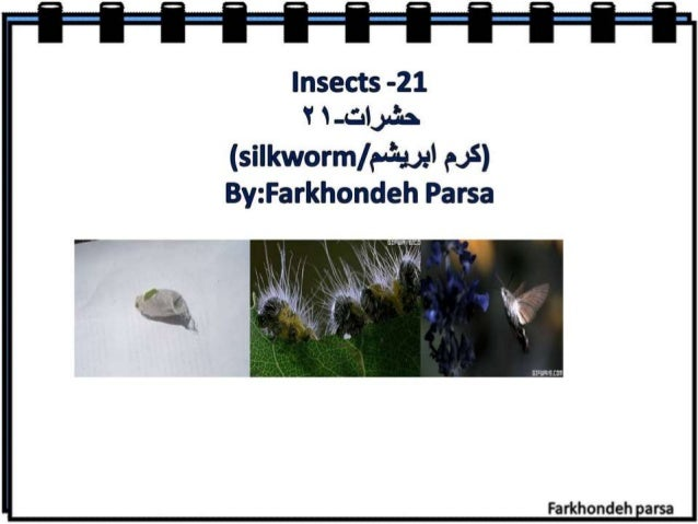 flraslects -231 'r -e; llJ= s§& (silltworm/ eézwl 6&5) Byr: E5arl<hond3e-it Parse  Farkhondeh