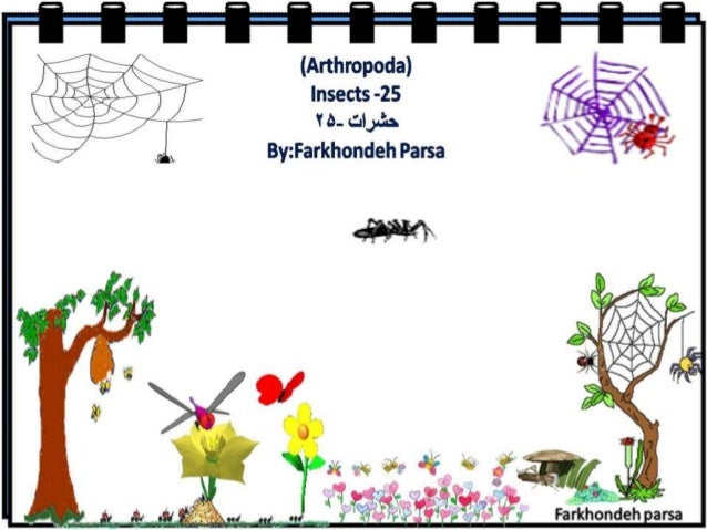 Insect 25