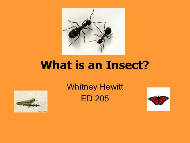 What is an Insect? Whitney Hewitt ED 205