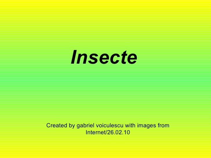 Insecte Created by gabriel voiculescu with images from Internet/26.02.10