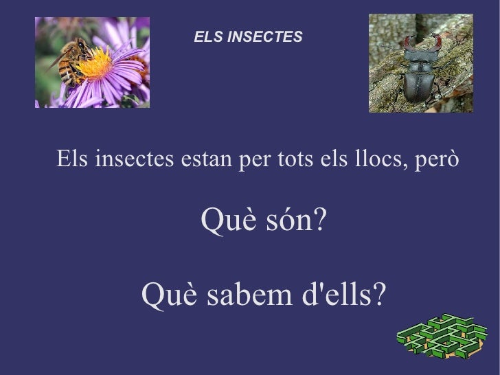 ELS INSECTESEls insectes estan per tots els llocs, però               Què són?         Què sabem dells?