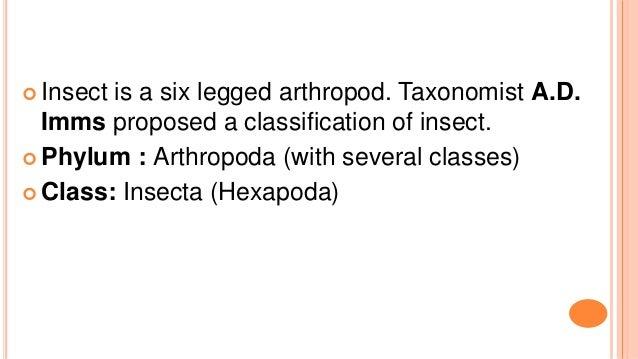 Insect order by kotresh Slide 3