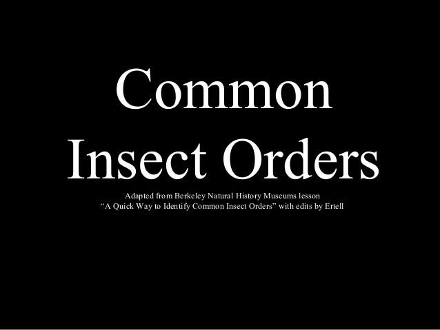 "Common Insect OrdersAdapted from Berkeley Natural History Museums lesson ""A Quick Way to Identify Common Insect Orders"" wi..."