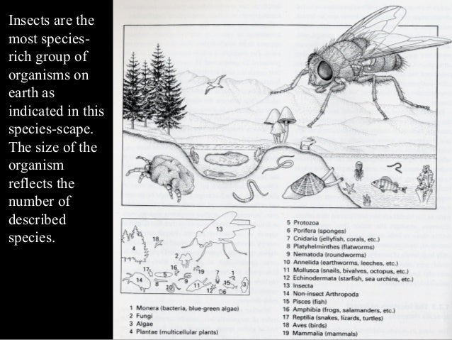 Insect orders Slide 2