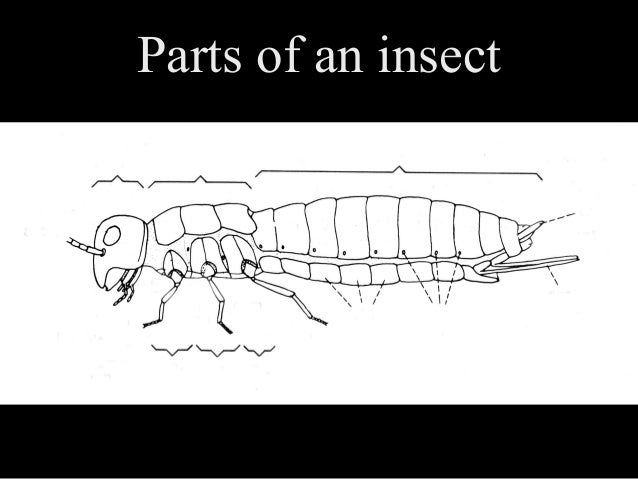 Insect orders Slide 3