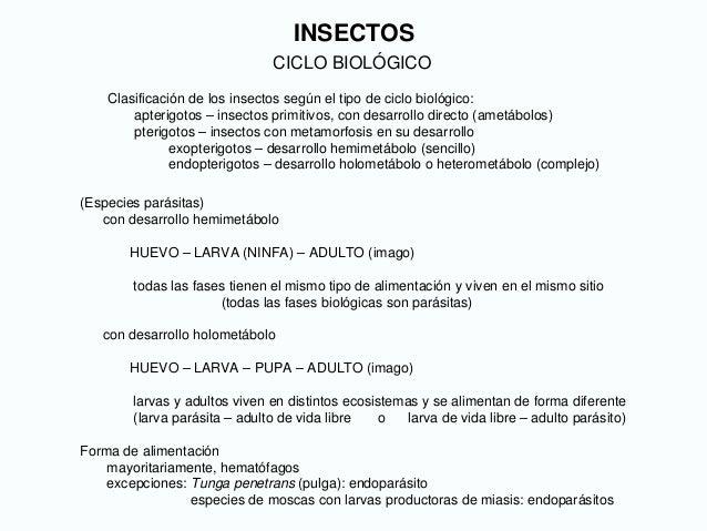 INSECTOS CICLO BIOLÓGICO Clasificación de los insectos según el tipo de ciclo biológico: apterigotos – insectos primitivos...