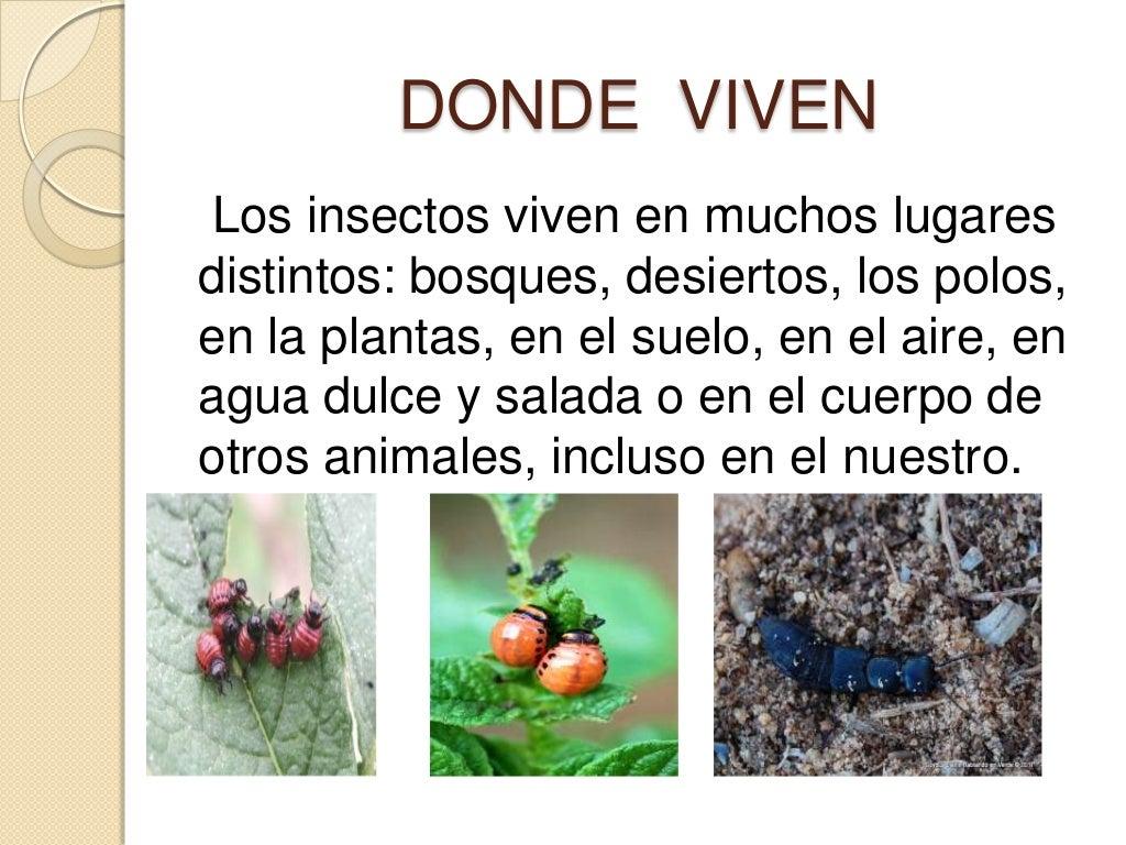 Insectos - Donde viven los acaros ...