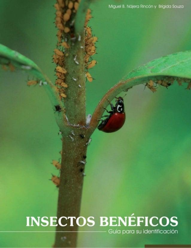 Insectos Benéficos Guía para su Identificación  MIGUEL B. NÁJERA RINCÓN Investigador en Manejo Agroecológico de Insectos Pla...