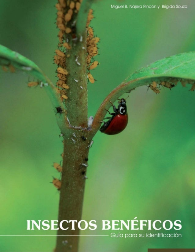 1 Insectos Benéficos Guía para su Identificación MIGUEL B. NÁJERA RINCÓN Investigador en Manejo Agroecológico de Insectos Pl...