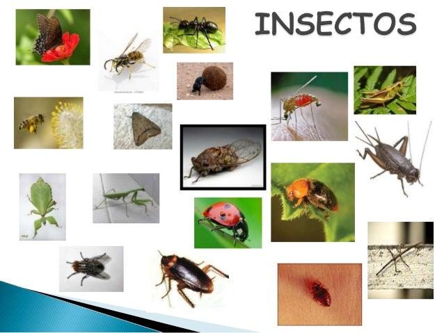 Nombres De Insectos