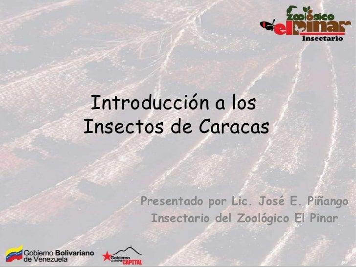 Introducción a losInsectos de Caracas     Presentado por Lic. José E. Piñango       Insectario del Zoológico El Pinar