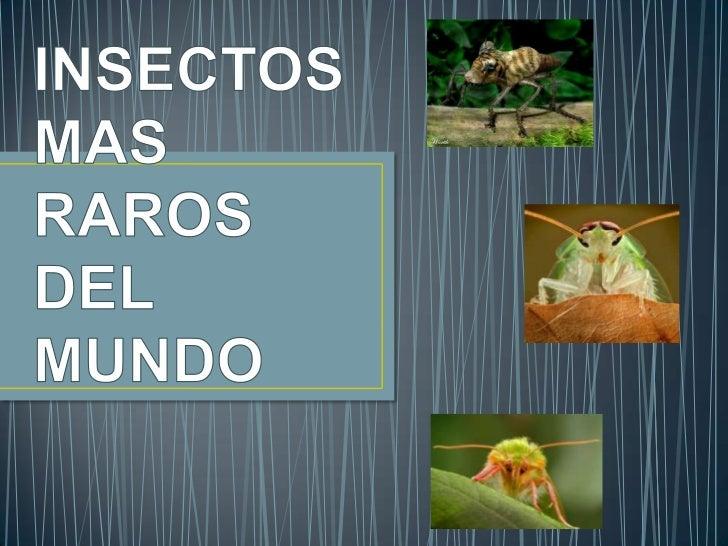 La mantis religiosa, conocida con otros nombres, como santateresa, es uninsecto de la orden mantodea originario del sur de...