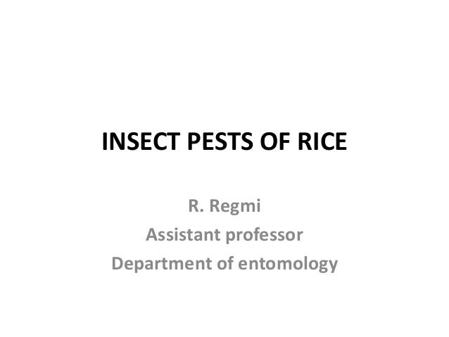 INSECT PESTS OF RICE R. Regmi Assistant professor Department of entomology