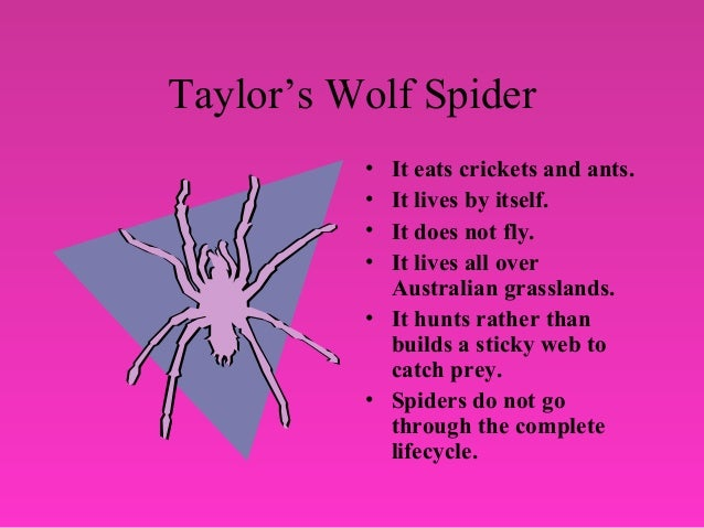What Do Wolf Spiders Eat >> Insect powerpoint presentation