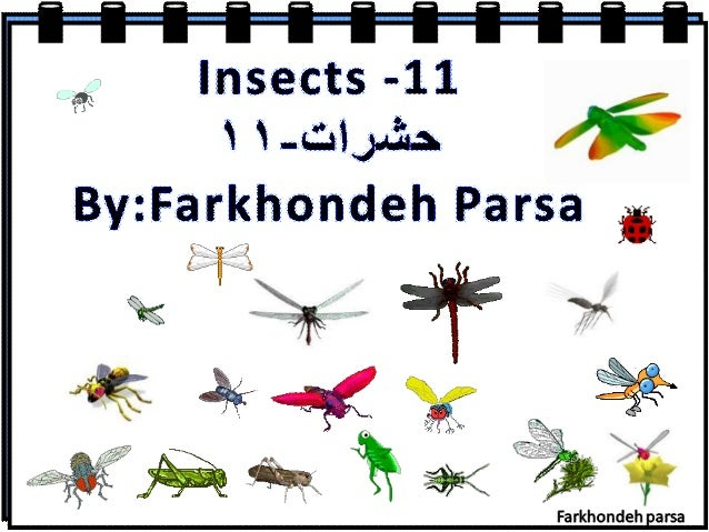 "Insects --11 I l. ... C§lJ. a3i~A *  By: Farkhondeh Parsa it  L I -3  'INQ ""' "". ""'  -I;  '"