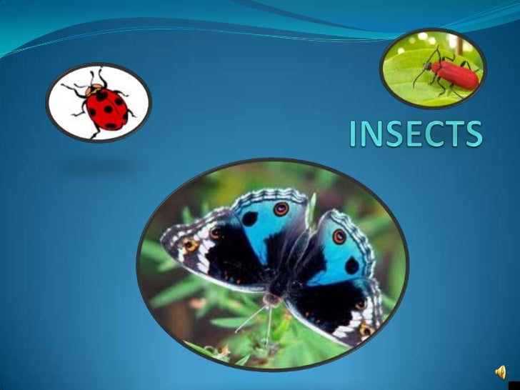 All Insects: Are invertebrates (which mean they do not have a backbone or internal skeleton. Instead they have a hard exo...