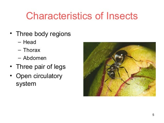 What Characteristics Do Bees & Ants Share?