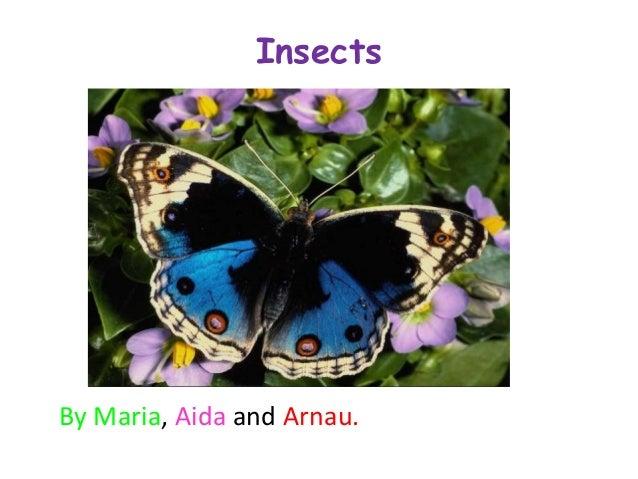 InsectsBy Maria, Aida and Arnau.