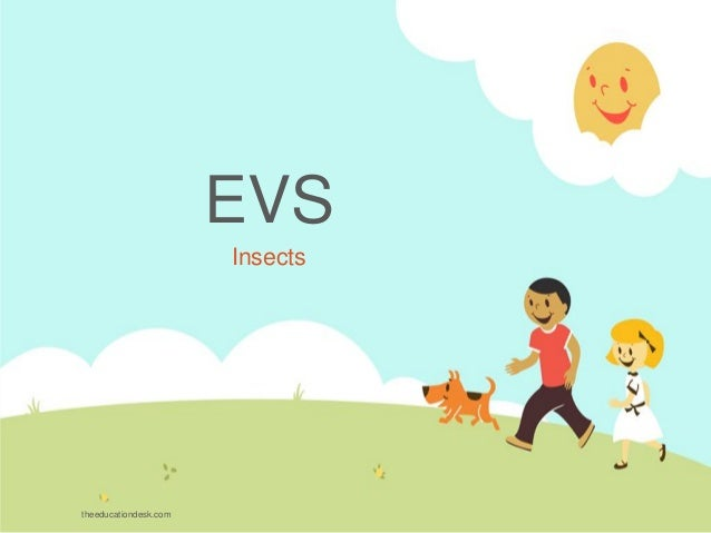 EVS Insects theeducationdesk.com