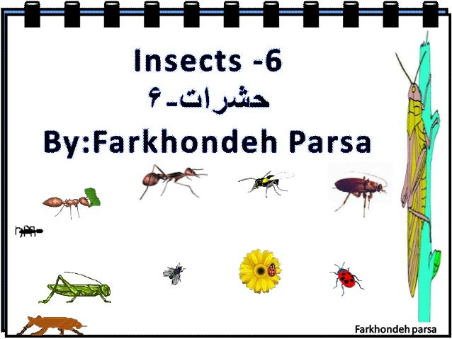 """Insects -6  'I7'. ..¢. '.'. a$J. a.'. L: By: Farkhondeh Parsa  ' L' I 9 ,1 /  """" Sf'  !  gag %' _,  _l  '.  1"""