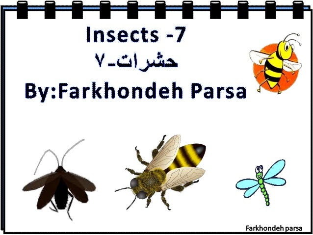 Insects -7  V. ..&L'. :$y. '.&: . By: Farkhondeh Parsa  Farkhondeh arsa