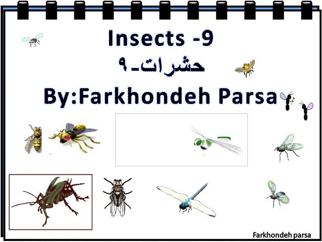 Insects -9 %. ..c: :iJ£a. a. 4 By: Farkhondeh Parsamgy  5:   Farkhondeh arsa