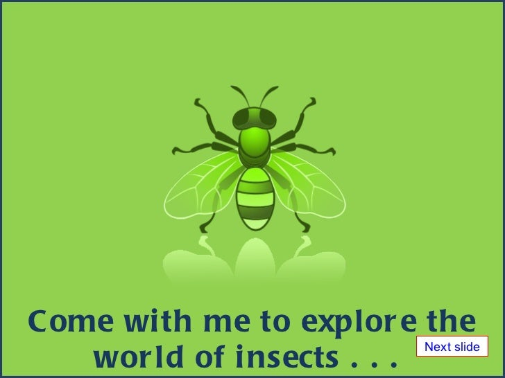 Come with me to explore the world of insects . . .  Next slide