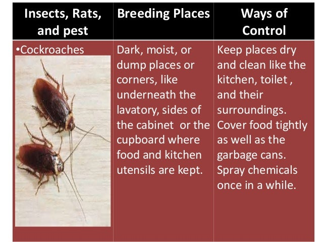 Insects And Pests In The Society