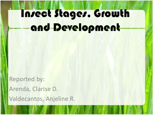Insect Stages, Growth and Development Reported by: Arenda, Clarise D. Valdecantos, Anjeline R.