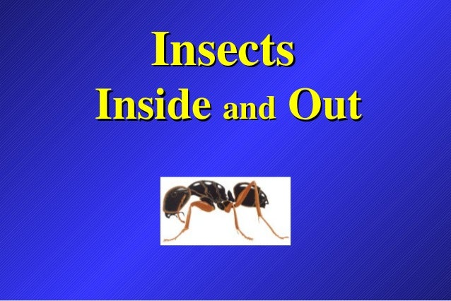 InsectsInside and Out