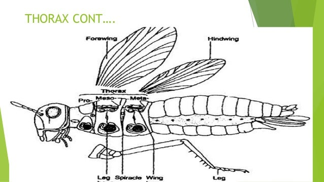 insects physiology 17 638?cb=1501565862 insects physiology