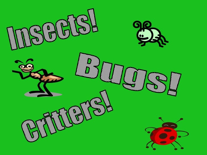 What do you know about       INSECTS?