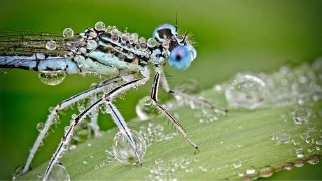 Macro photos, Insects touched by dew drops...