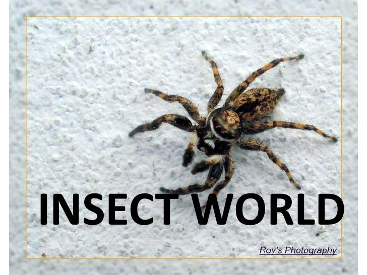 INSECT WORLD<br />