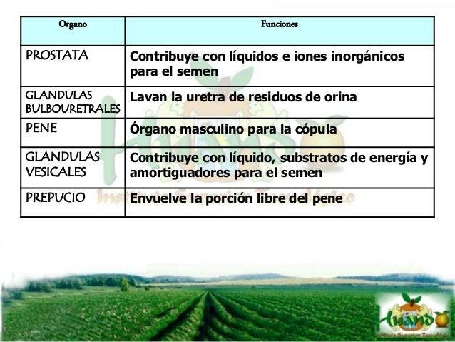 CARACTERISTICAS DEL SEMEN Animal Volumen (ml) Concentración semen (109/ml) Total espermas (109) Motilidad espermas (%) Mor...