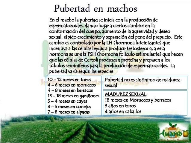ANIMAL LARGO DEL ESTRO TIEMPO DE OVULACION CICLO ESTRAL (DIAS) Vaca 18 hrs. 10-15 hrs 21 Yegua 5-7 días 1-2 días 21-22 Ove...