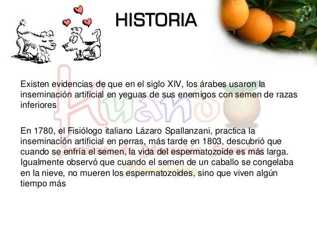 HISTORIA Existen evidencias de que en el siglo XIV, los árabes usaron la inseminación artificial en yeguas de sus enemigos...