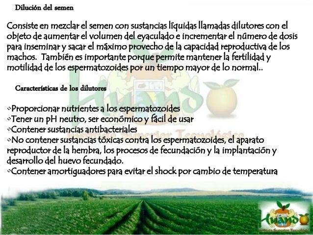 Tanque criogénico o balón de nitrógeno Contiene nitrógeno líquido y permite conservar el semen