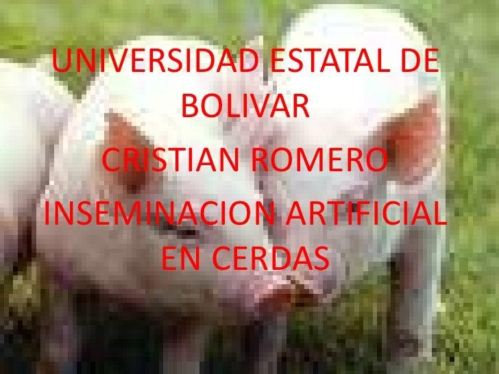 UNIVERSIDAD ESTATAL DE BOLIVAR<br />CRISTIAN ROMERO<br />INSEMINACION ARTIFICIAL EN CERDAS<br />