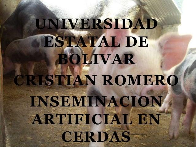 UNIVERSIDAD ESTATAL DE BOLIVAR CRISTIAN ROMERO INSEMINACION ARTIFICIAL EN CERDAS
