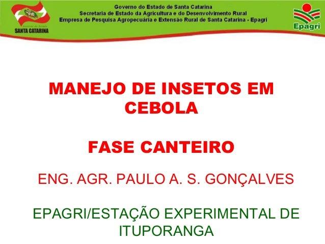 ENG. AGR. PAULO A. S. GONÇALVES EPAGRI/ESTAÇÃO EXPERIMENTAL DE ITUPORANGA MANEJO DE INSETOS EM CEBOLA FASE CANTEIRO