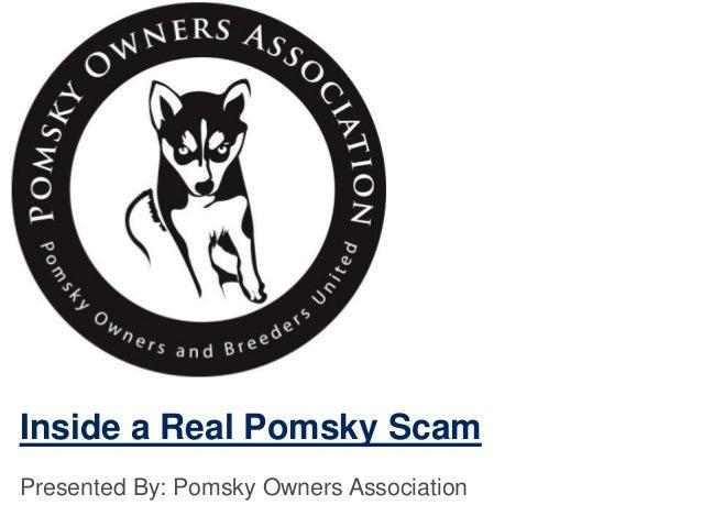Inside a Real Pomsky Scam Presented By: Pomsky Owners Association