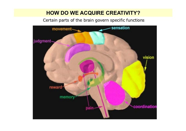 HOW DO WE ACQUIRE CREATIVITY?Certain parts of the brain govern specific functions