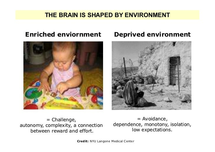 THE BRAIN IS SHAPED BY ENVIRONMENT  Enriched enviornment                      Deprived environment          = Challenge,  ...
