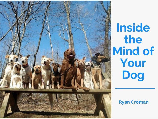 Inside the Mind of Your Dog Ryan Croman